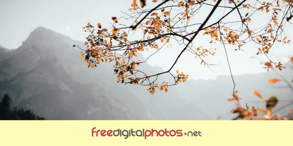 Freedigitalphotos - Copyright free images