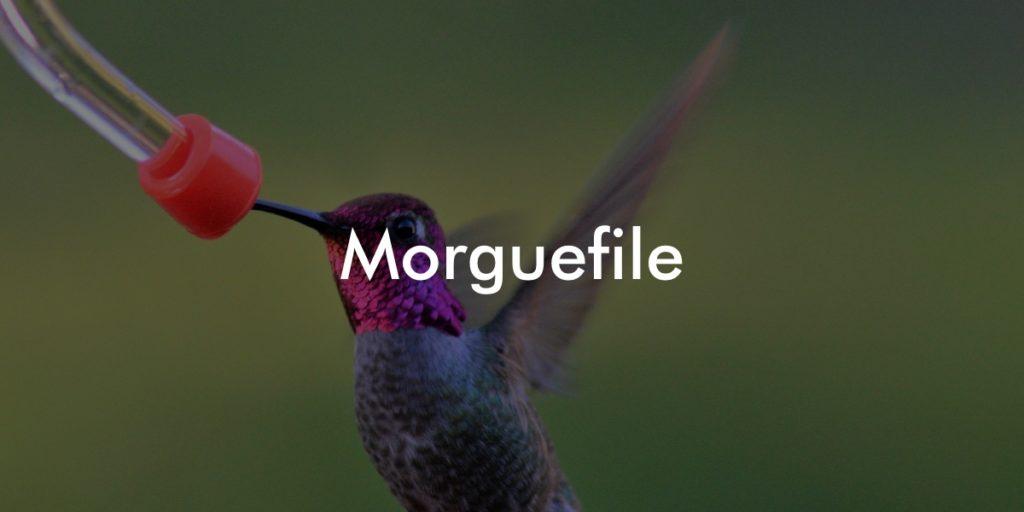 morguefile copyright free photos